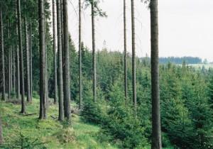 smrkovy les