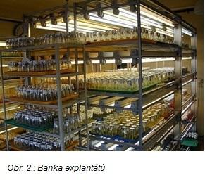 banka explantatu