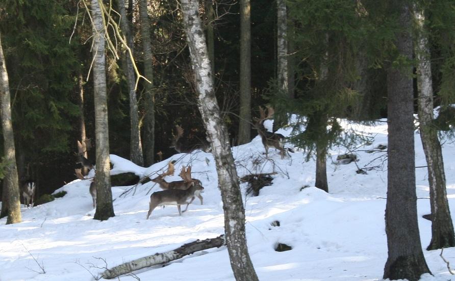 danci v zime