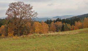 Dobrošov_jasan v podzimní krajině