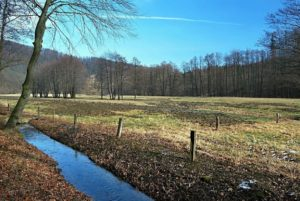 55083031 - stream with meadow and trees around on moravice river valley near hradec nad moravici with clear sky