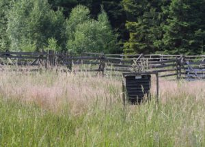 Pheromone trap for bark beetle in grass on meadow near forest .
