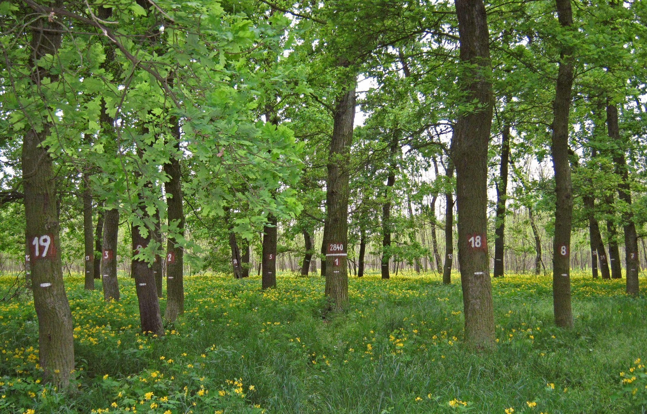 Monitorovací plochy slouží ke kontrole zdravotního stavu lesa