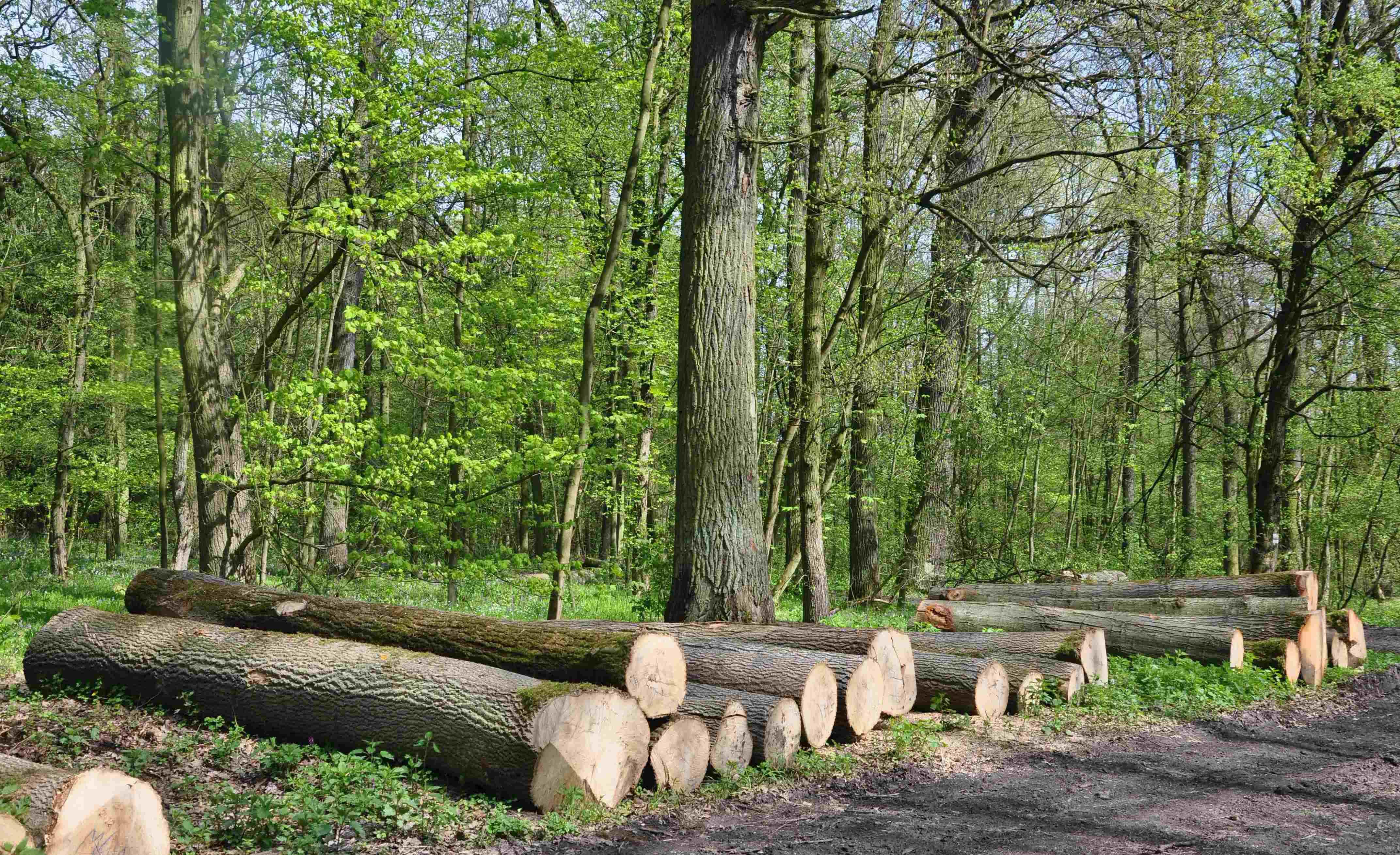 Pomocník pro menší vlastníky lesů – mobilní hydraulický naviják