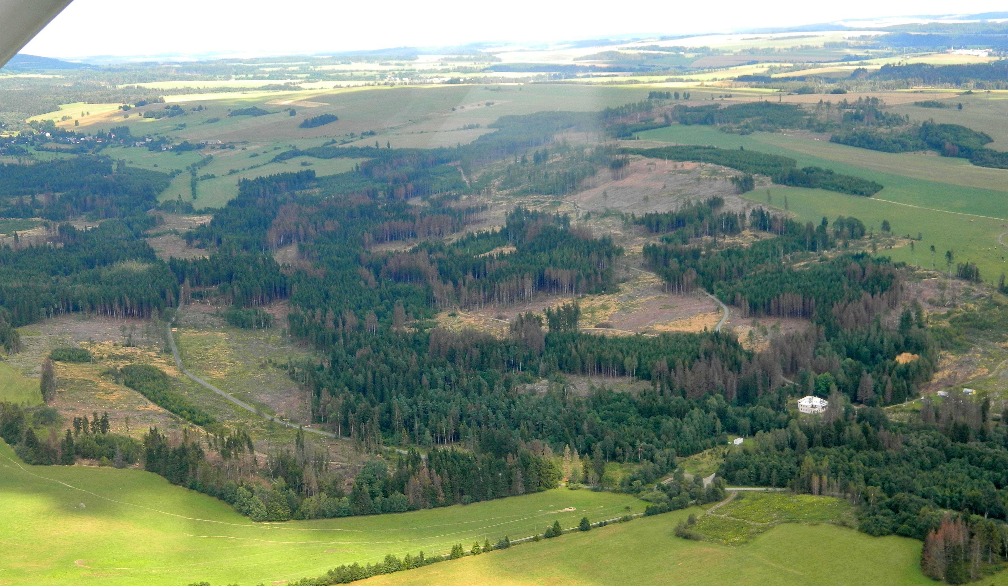 Deštivé počasí a včasné zpracování napadených stromů může kůrovce zbrzdit
