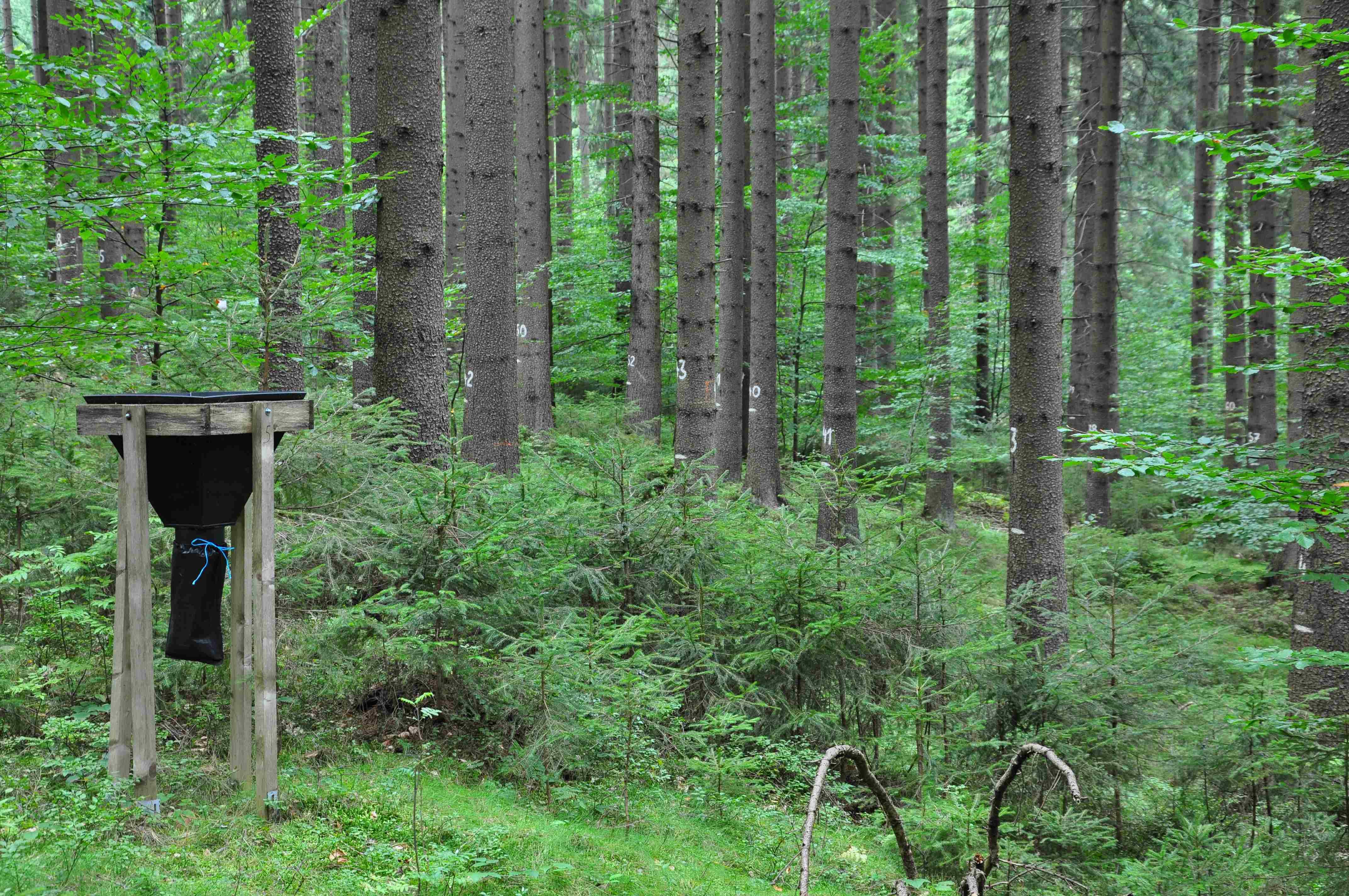 Co nejzajímavějšího přináší lesnická věda
