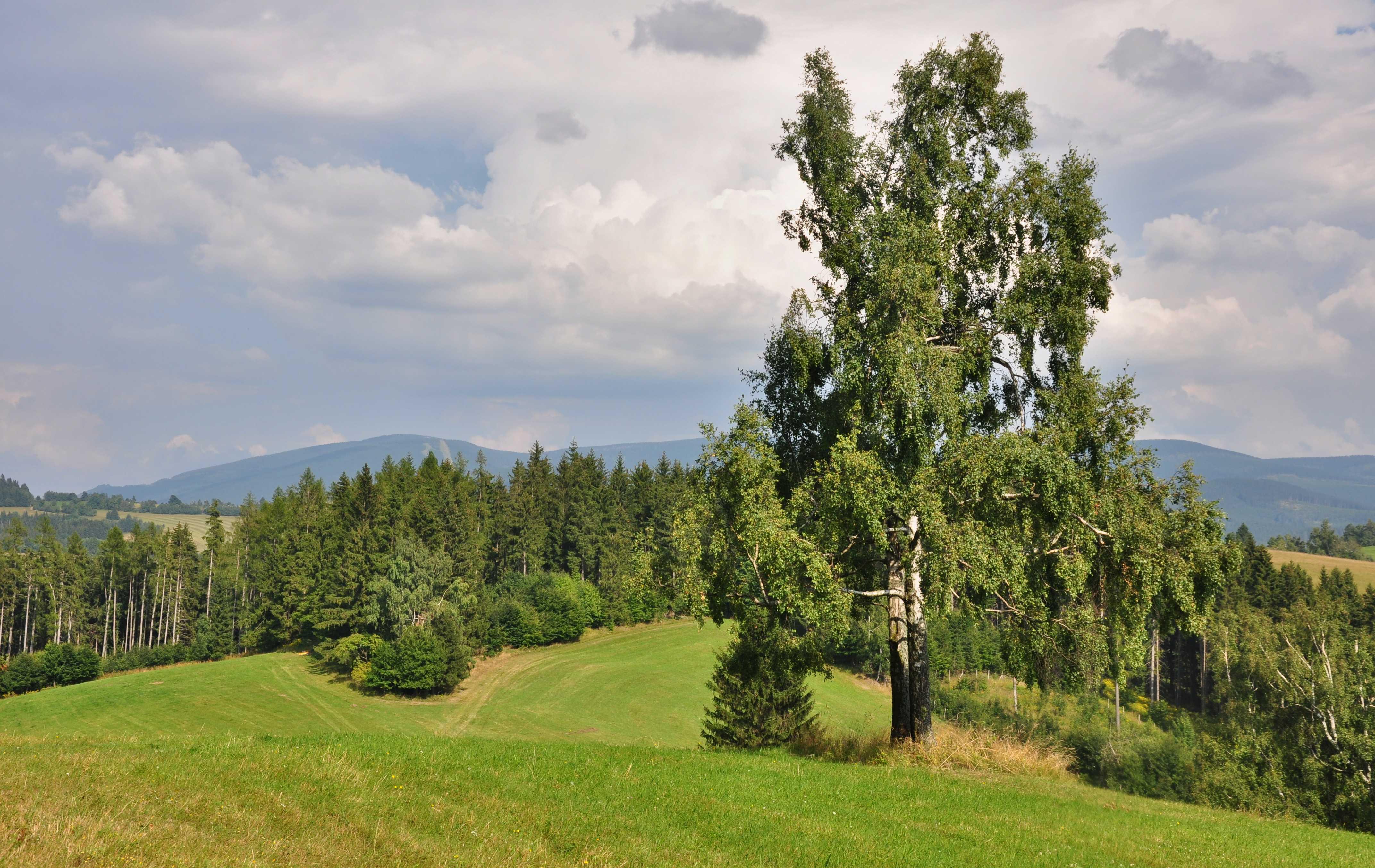 Jak nejlépe docílit druhově pestrých lesů?