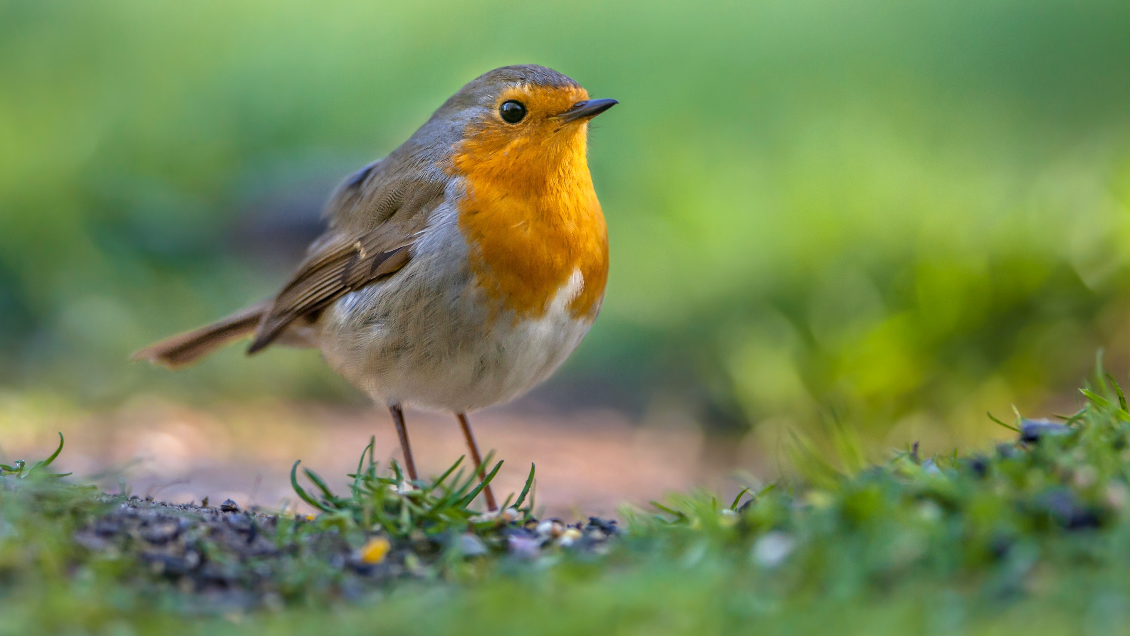 Společenstva ptáků lužních lesů ovlivňuje množství zvěře i hospodaření