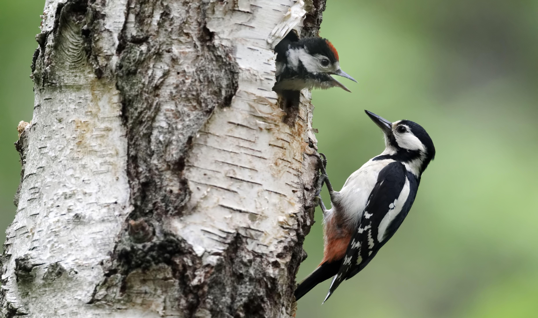 lov velkého ptáka