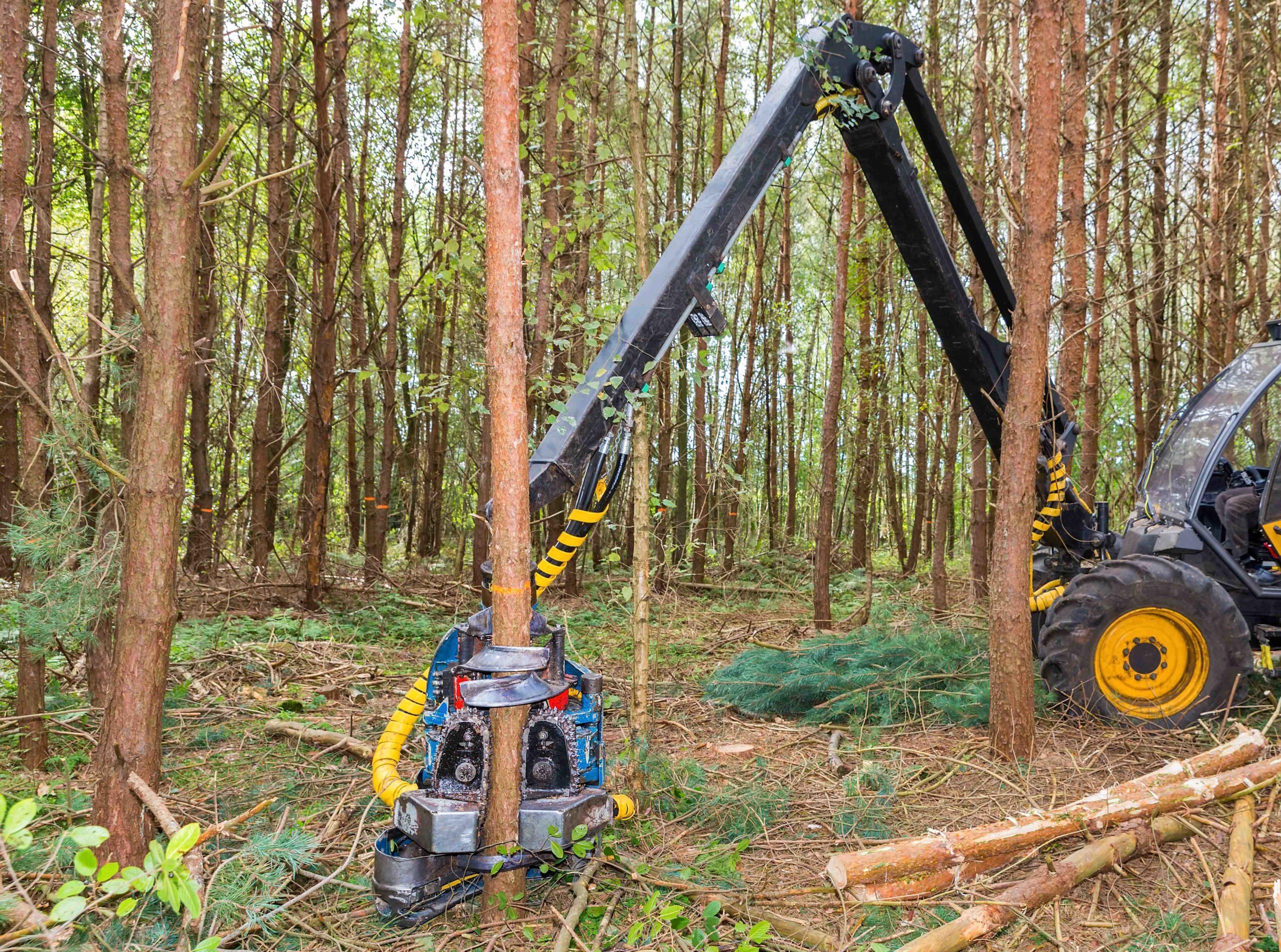 Harvestory: efektivní nástroj pro výchovu lesů