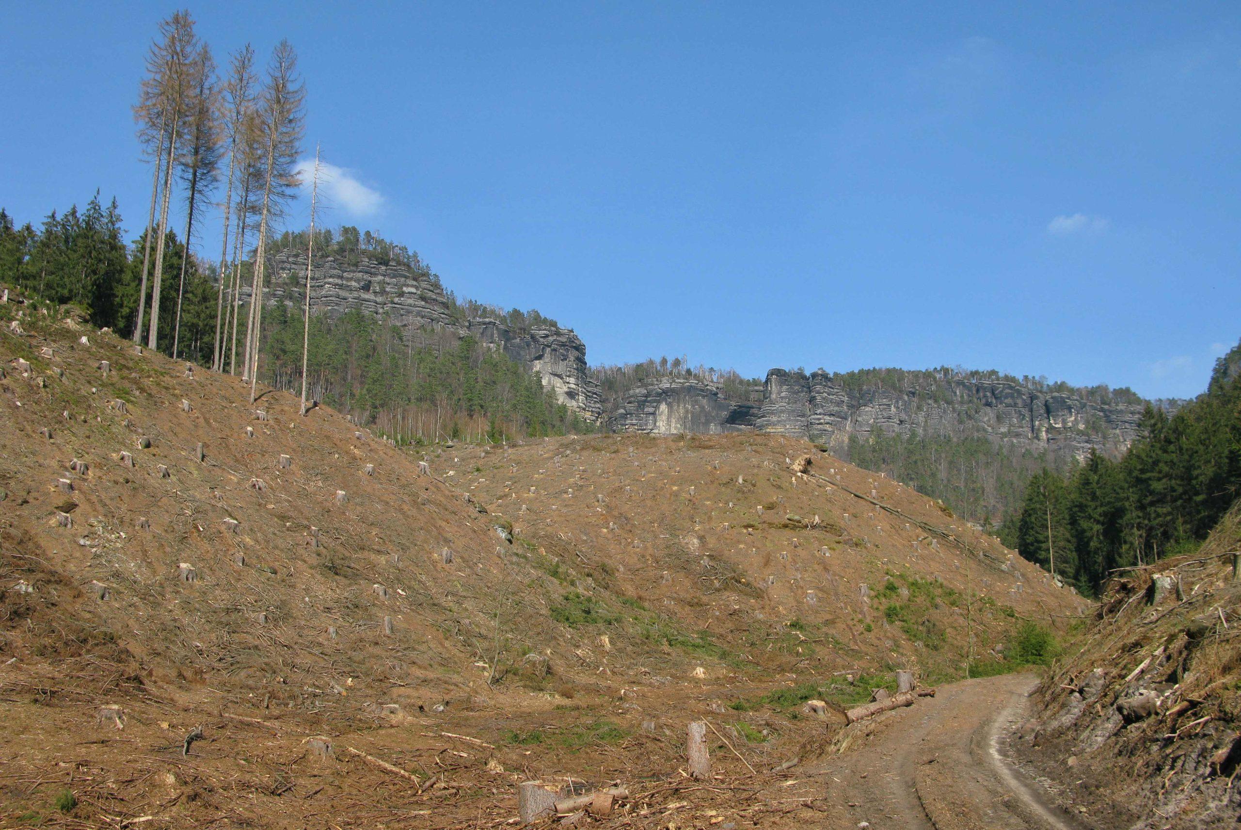 Vývoj zdravotního stavu našich lesů