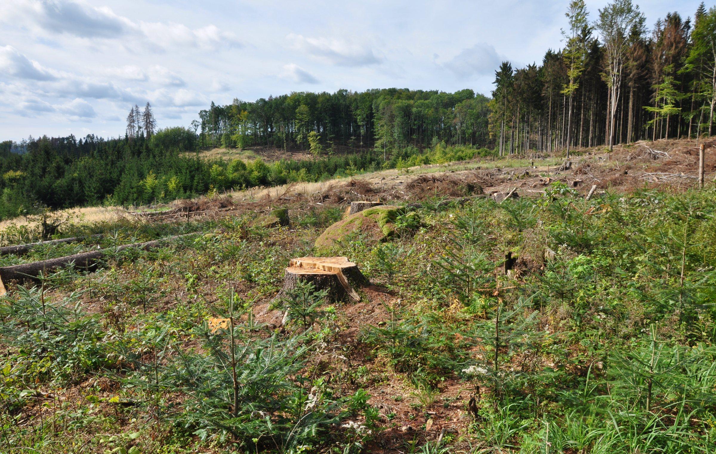 Důsledky kůrovcové kalamity na budoucnost lesnictví ve střední Evropě